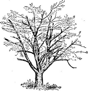 contoh soal psikotes gambar pohon